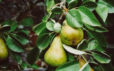 What is regenerative farming?